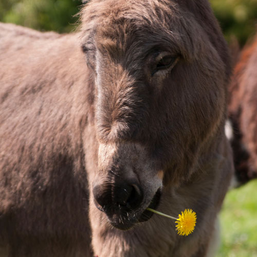Donkey Dinner